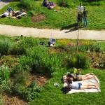 bain-soleil-pelouse-parc-daily-belleville