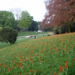 parc-buttes-chaumont-75019-paris-east-village-tulipe-ok